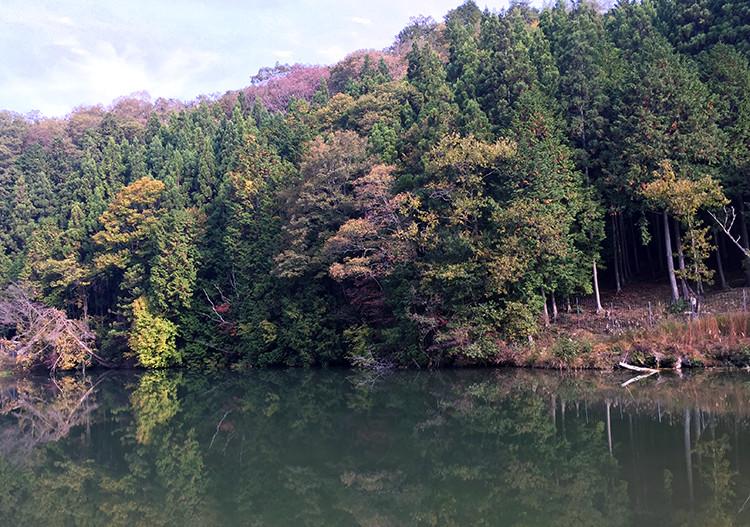 紅葉が水面に移る絵