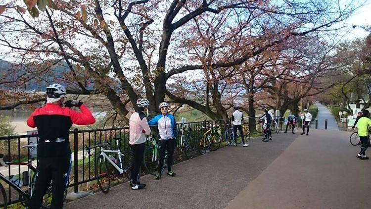御幸橋にて。桜の紅葉が残っています。